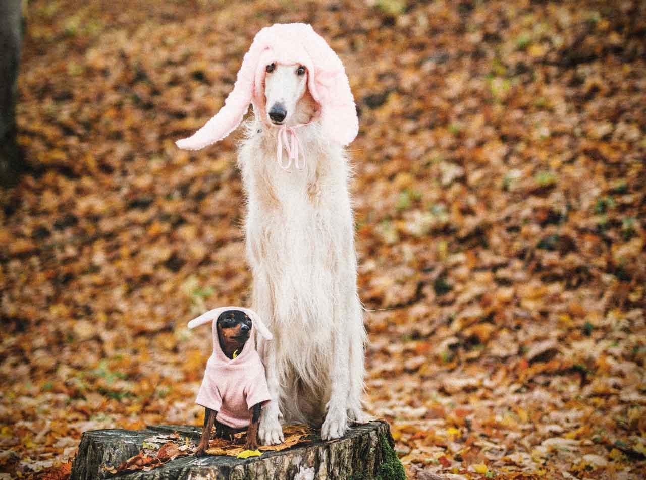 Fotografie von Hunden mit Mützen